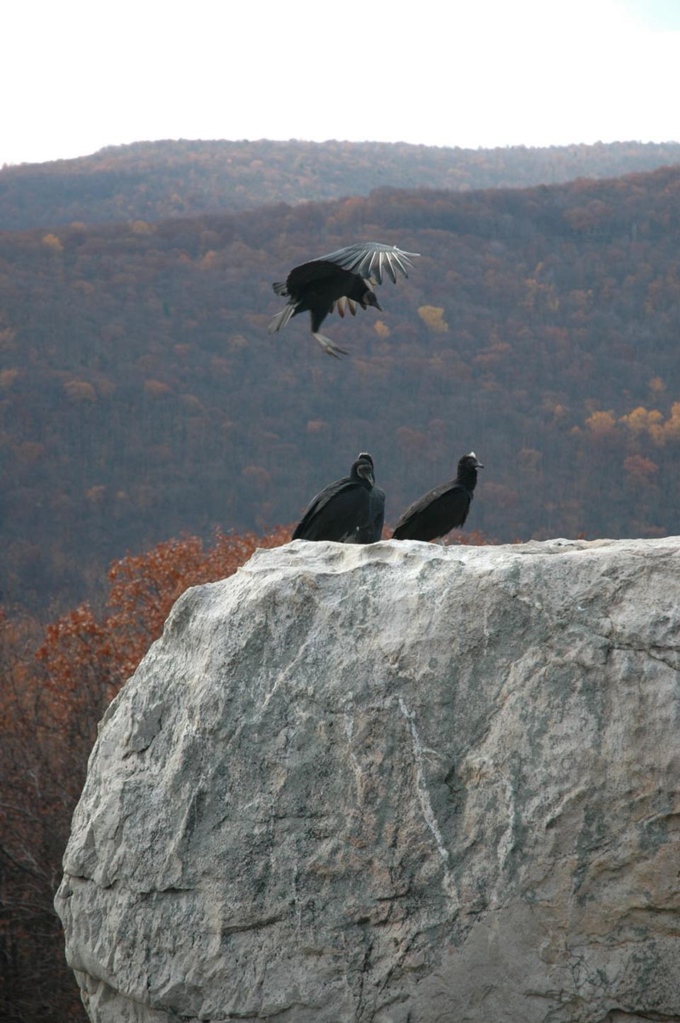 Free Wolf Rock Catoctin Mountain