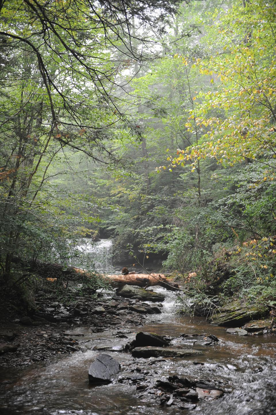 Free Ricketts Glen State Park