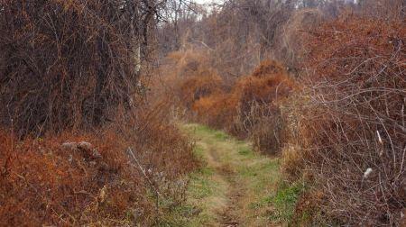 Free Appalachian Trail Virginia