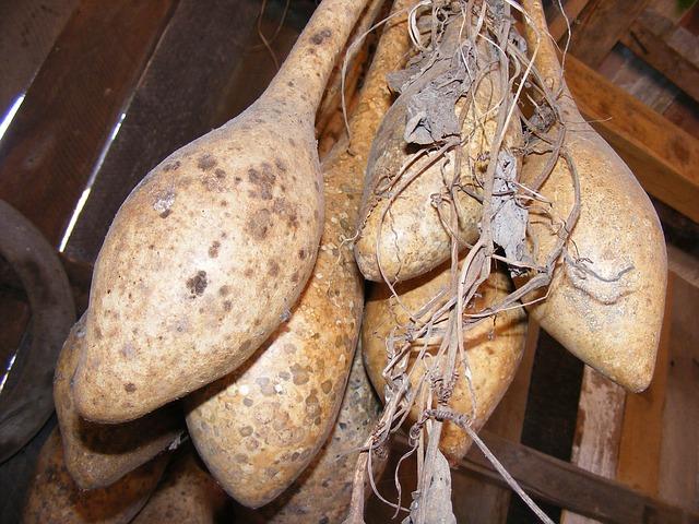 Free bottle calabash dried gourds lagenaria pipe