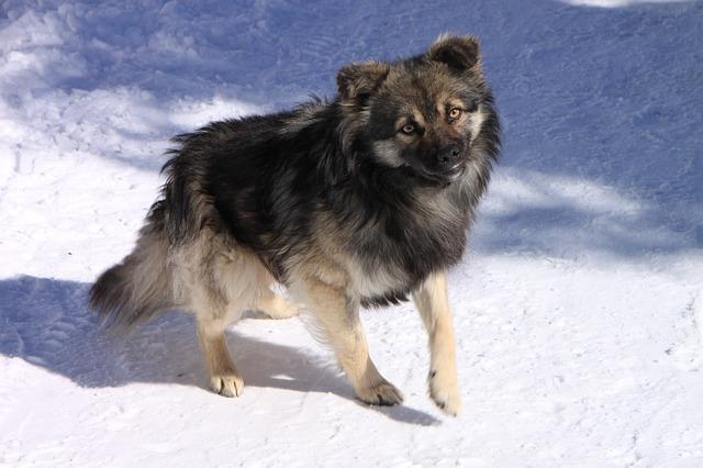 Free Photos: Cold dogs gorj mountain ranca road white animals | Emilian Robert Vicol