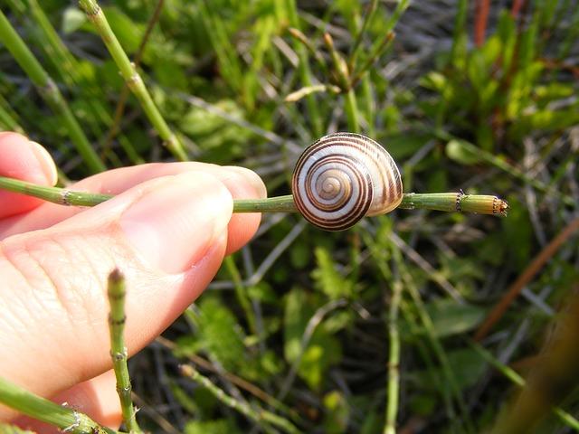 Free climbing close-up coiled gastropoda grass green