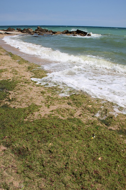Free algae beach covered green sea seaweed water