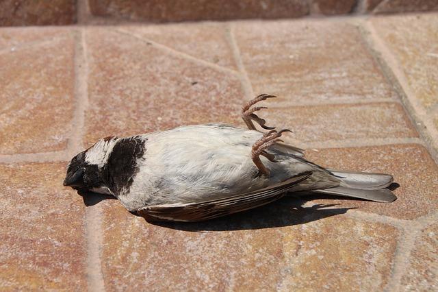 Free dead sparrow birds