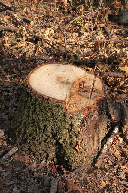 Free bark chop cut forest fresh stump tree warming
