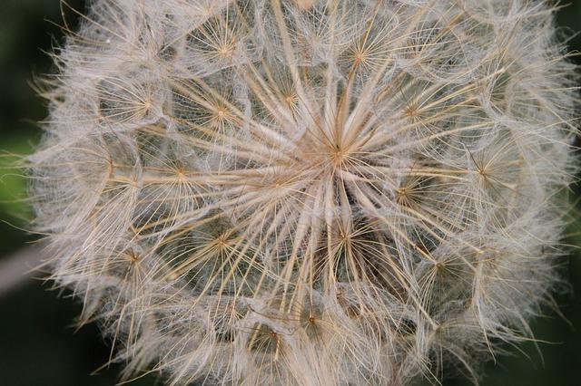 Free blue close-up dandelion fluff officinale sky