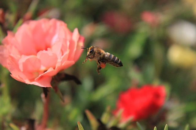 Free bee flight flowers honey insects summer