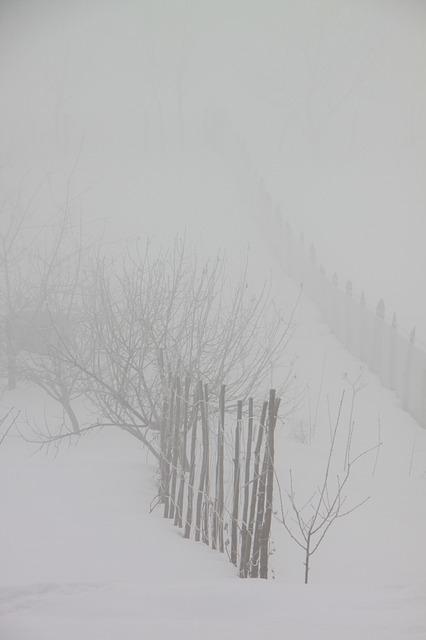 Free cold fog mist morning snow nature winter