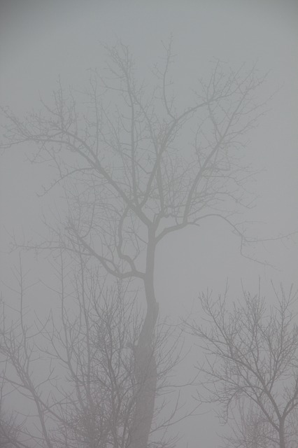 Free cold fog mist morning snow nature winter