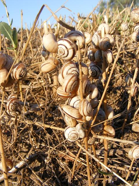 Free grass heat snails stuck animals