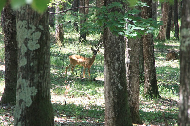 Free deer forest trees wild young animals