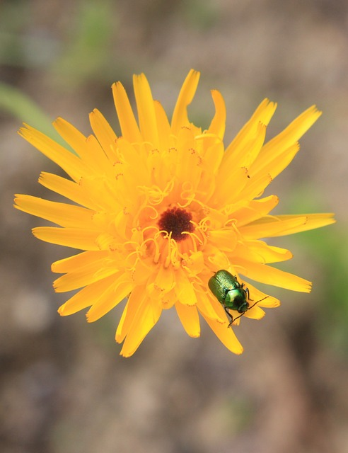 Free bugs flower yellow insects plants