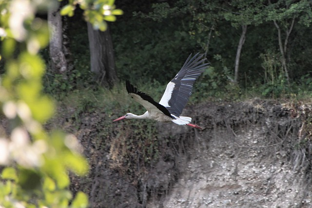 Free bed river stork water white birds