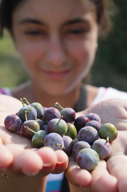 Free berries blackthorn blue blueberries girl prunus