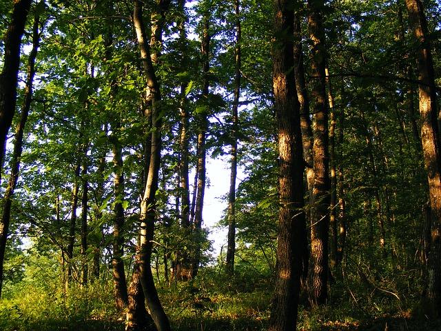 Free nature plants trees tree oak jove 39 s