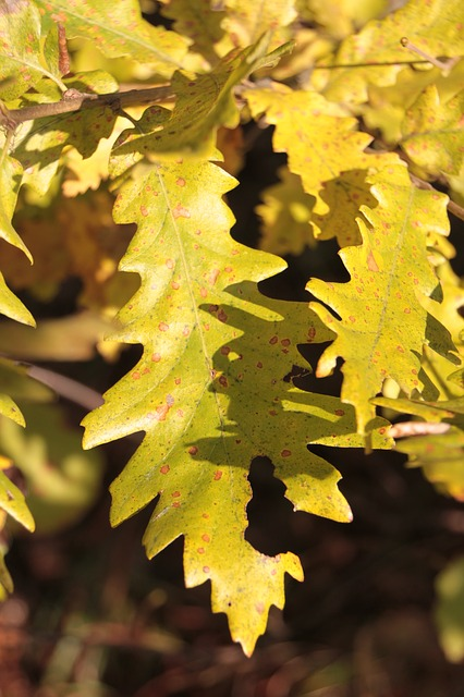 Free colors fall forest leaf leaves light warm yellow