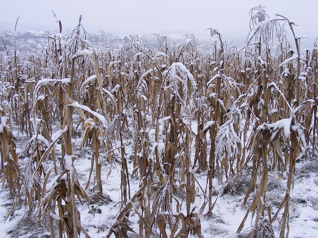 Free nature season winter snow plants