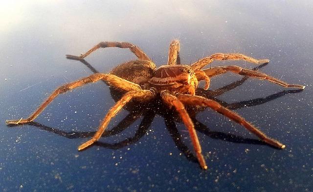 Free arachnids araneae arthropoda big giant spider