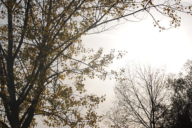Free fog colourless tree nature