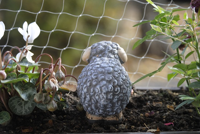 Free sheep balcony plant