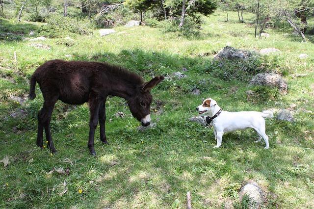 Free donkey animal mammal rural italy
