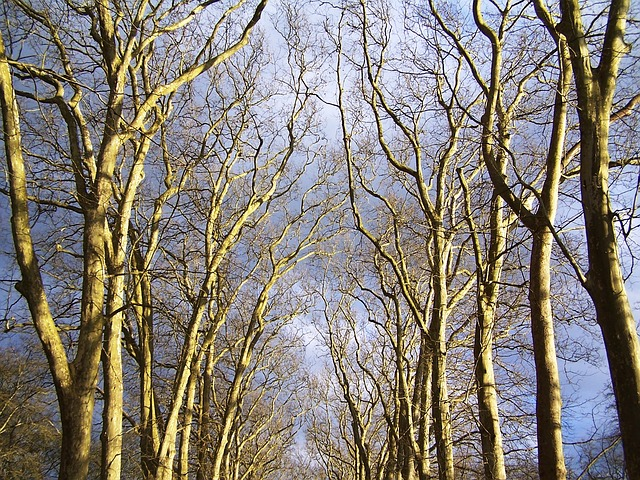 Free forest sheet road trees sky