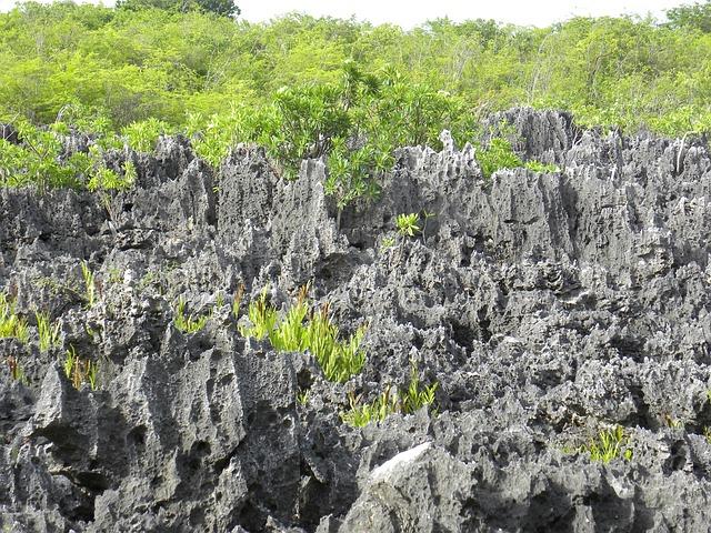 Free cayman islands cayman island island caribbean