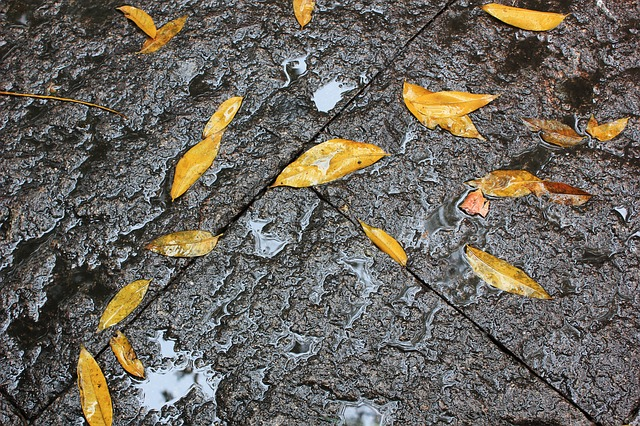 Free defoliation ground rain yellow leaves