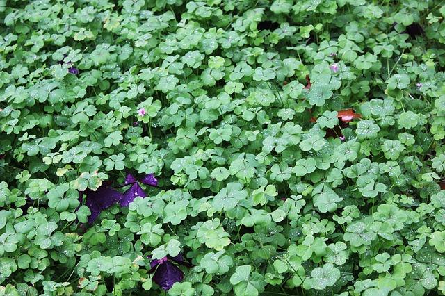 Free clover green lucky luck fresh