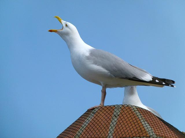 Free sea gull bird sky clouds building on top macro