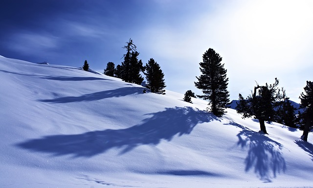 Free snow winter mountains tree wintry sun shadow