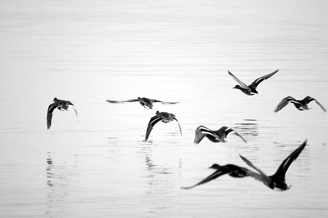 Free seagull water blue lake lake balaton nature bird