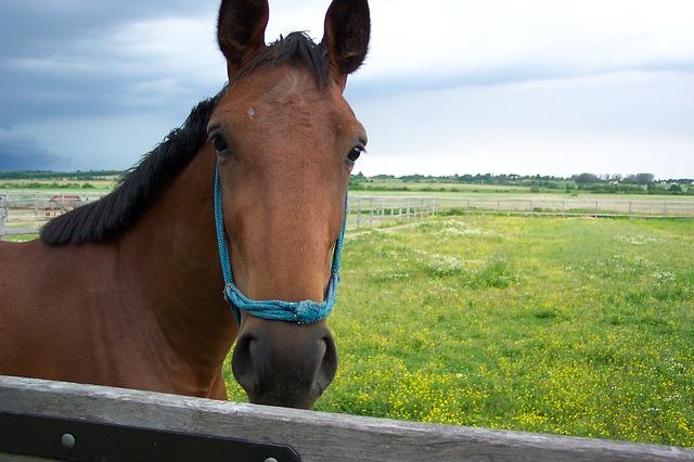 Free precious people hungary horse animal horses
