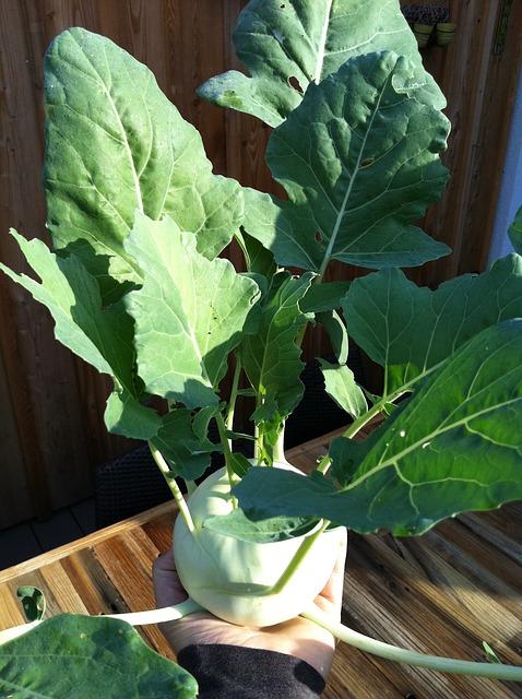 Free kohlrabi plant vegetables cook journal garden