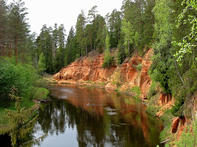 Free latvia forest trees woods stream river water