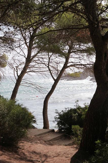 Free tree view sea island mallorca autumn nature