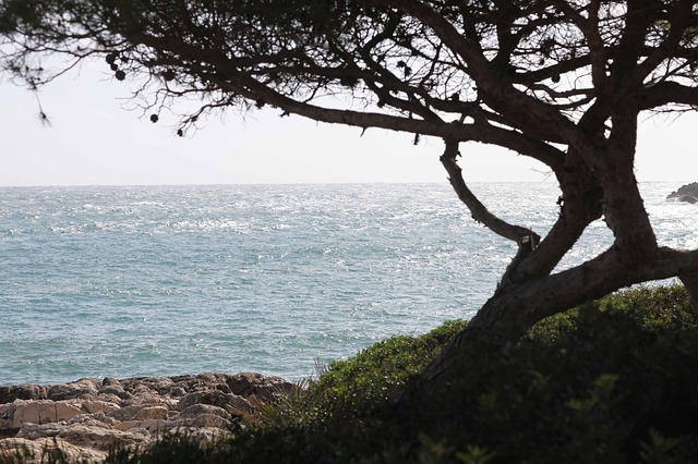 Free tree mallorca autumn font de sa cala holiday sea
