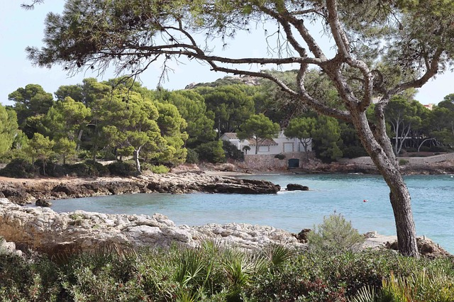 Free sun beach autumn mallorca water tree view