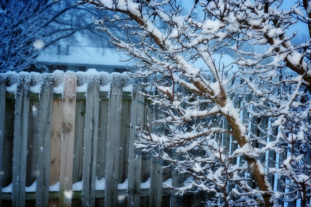 Free winter fence snow tree cold garden fence snowy