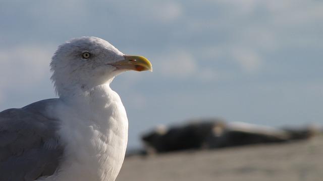 Free seagull beach borkum north sea