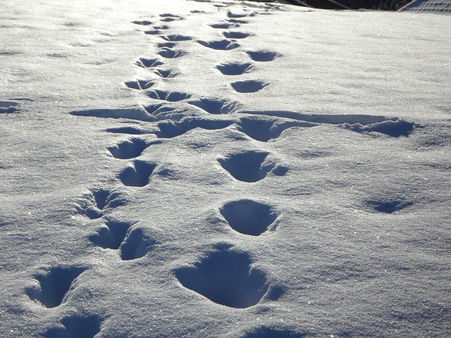 Free traces tracks in the snow snow winter footprints