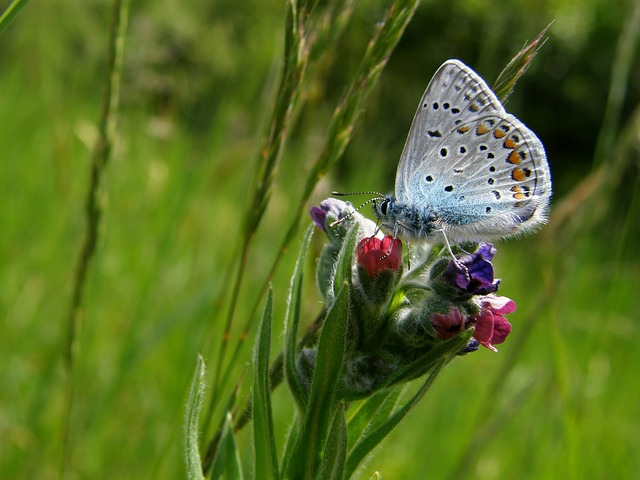 Free grass plants butterfly insect beautiful nature