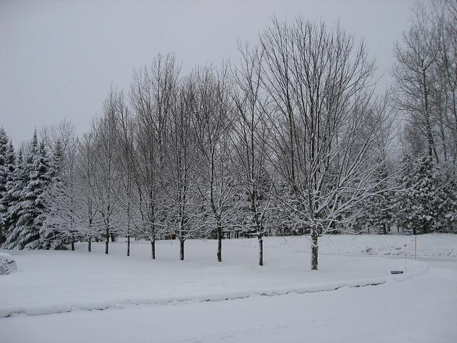 Free winter tree snow