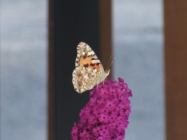 Free butterfly flower pink turkish organ