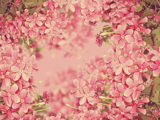 Free flowers pink texture background