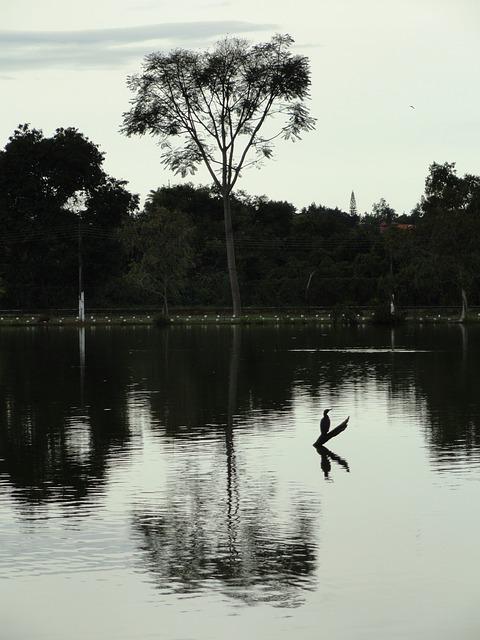 Free Photos: Brasilia brazil lake pond water reflections   David Mark