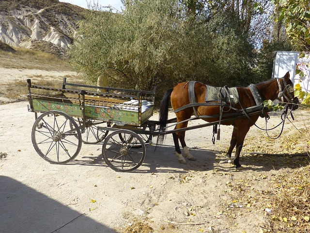 Free Photos: Coach horse drawn carriage horse wagon dare | LoggaWiggler