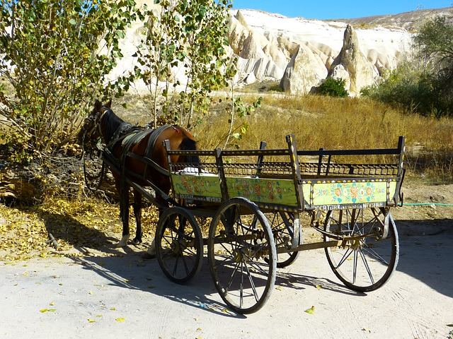 Free coach horse drawn carriage horse wagon dare
