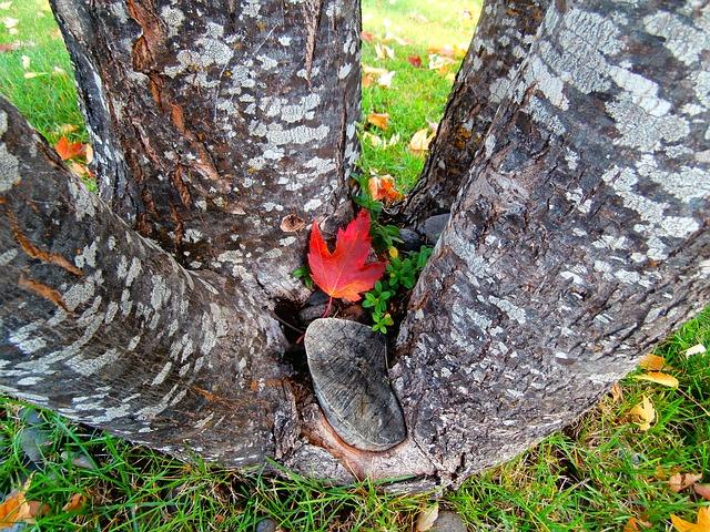 Free tree nature leaves