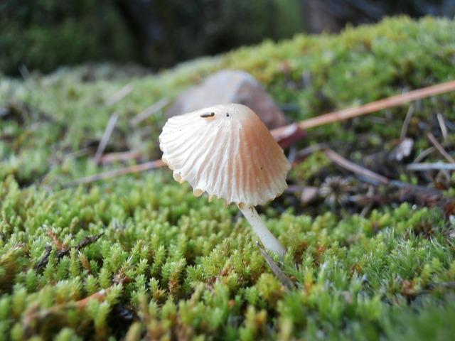 Free mushroom forest nature